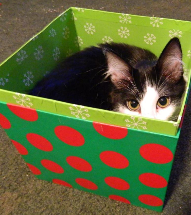 Molly in Xmas Box (1)