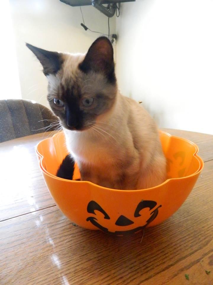 Nutmeg in Pumpkin (1)